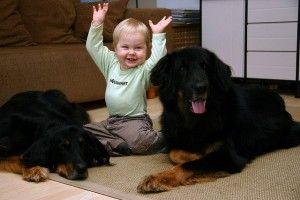 profesores-perros-ninos-escolares-ayudas-infantiles-beneficios-colegios-art